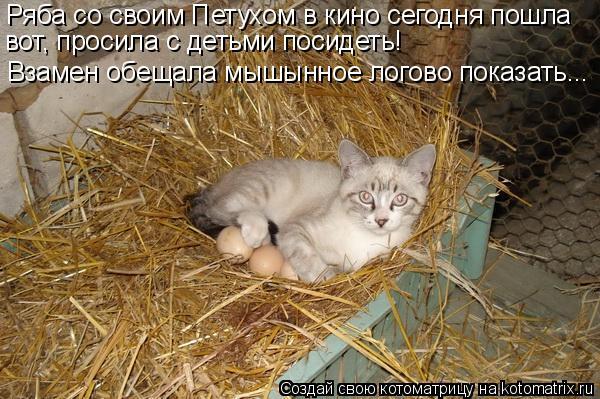 Котоматрица: Ряба со своим Петухом в кино сегодня пошла вот, просила с детьми посидеть! Взамен обещала мышынное логово показать...