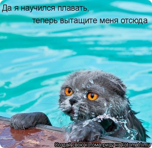 Котоматрица: Да я научился плавать,  теперь вытащите меня отсюда