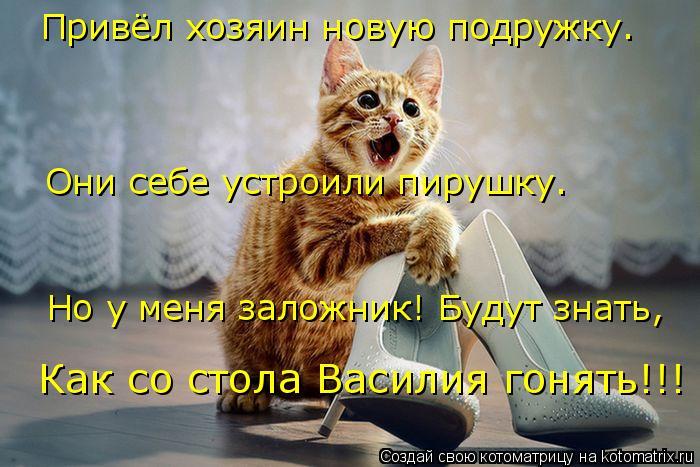 Котоматрица: Привёл хозяин новую подружку. Они себе устроили пирушку. Но у меня заложник! Будут знать, Как со стола Василия гонять!!!