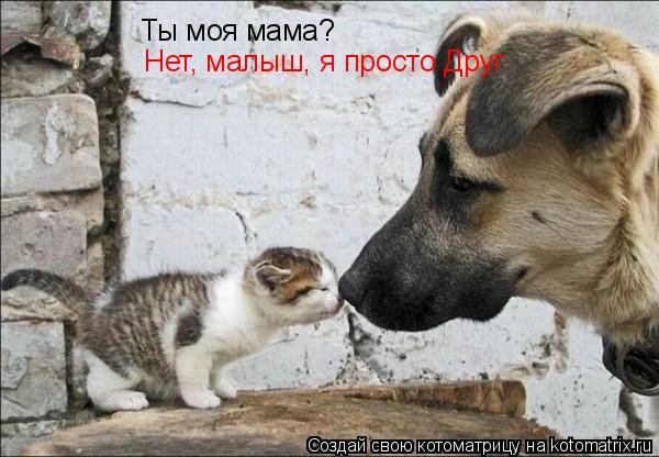 Котоматрица: Ты моя мама? Нет, малыш, я просто Друг
