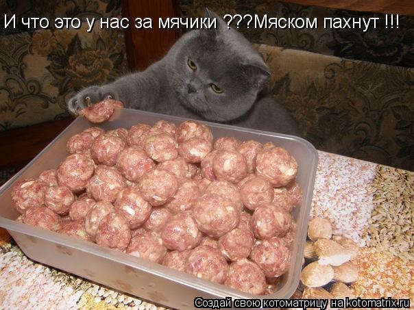 Котоматрица: И что это у нас за мячики ???Мяском пахнут !!!