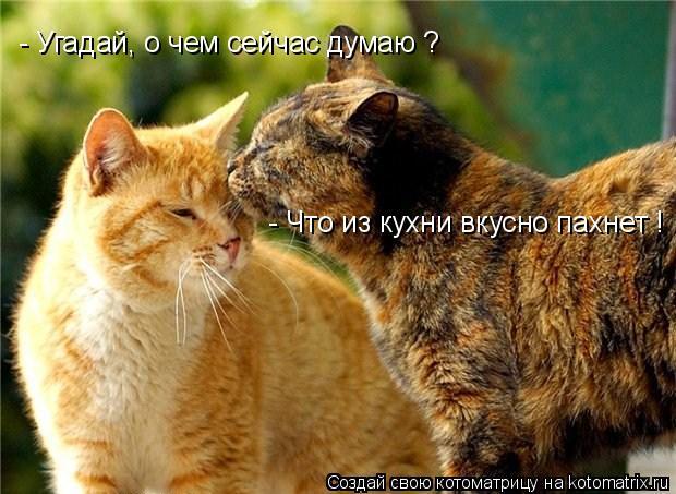 Котоматрица: - Угадай, о чем сейчас думаю ? - Что из кухни вкусно пахнет !