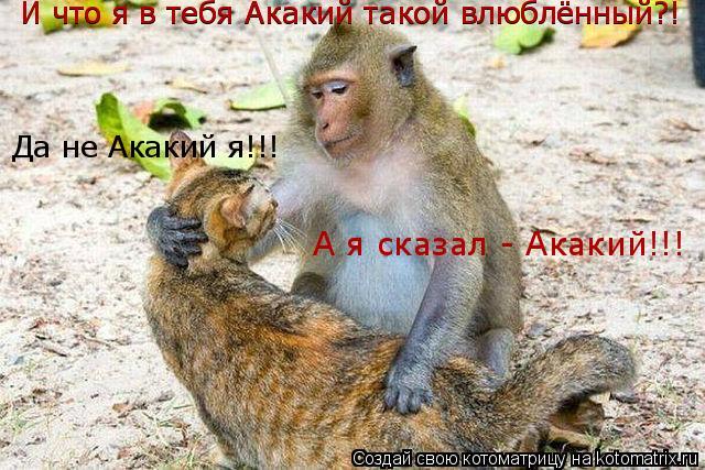 Котоматрица: И что я в тебя Акакий такой влюблённый?! Да не Акакий я!!! А я сказал - Акакий!!! И что я в тебя Акакий такой влюблённый?!
