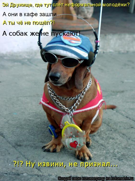 Котоматрица: Эй Дружище, где тут слёт неформальной молодёжи? А они в кафе зашли... А ты чё не пошёл?! А собак же не пускают! ?!? Ну извини, не признал...
