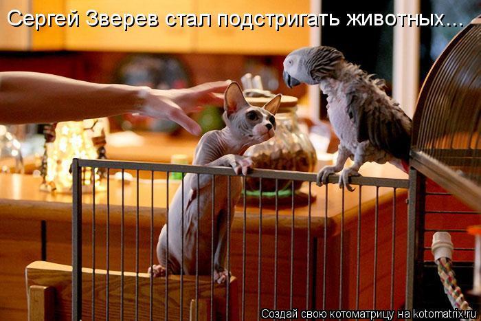 Котоматрица: Сергей Зверев стал подстригать животных...