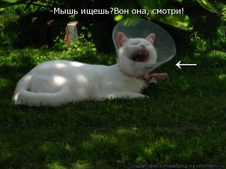 Котоматрица: -Мышь ищешь?Вон она, смотри! ←