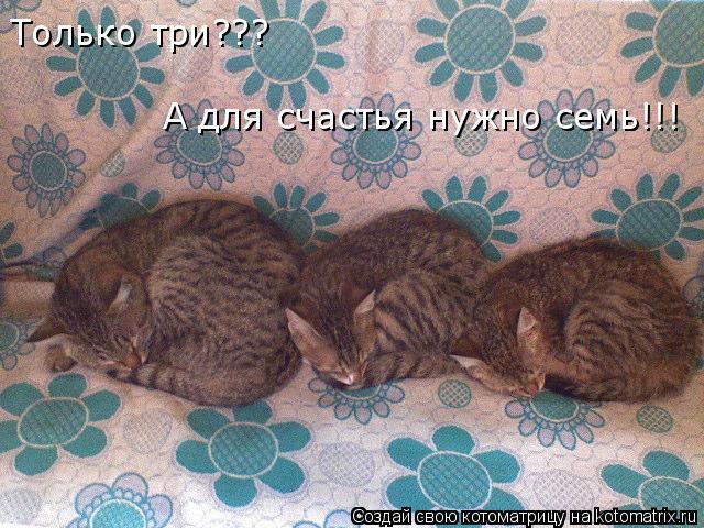 Котоматрица: Только три??? А для счастья нужно семь!!!