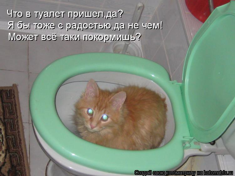 Котоматрица: Что в туалет пришел,да? Я бы тоже с радостью,да не чем! Может всё таки покормишь?