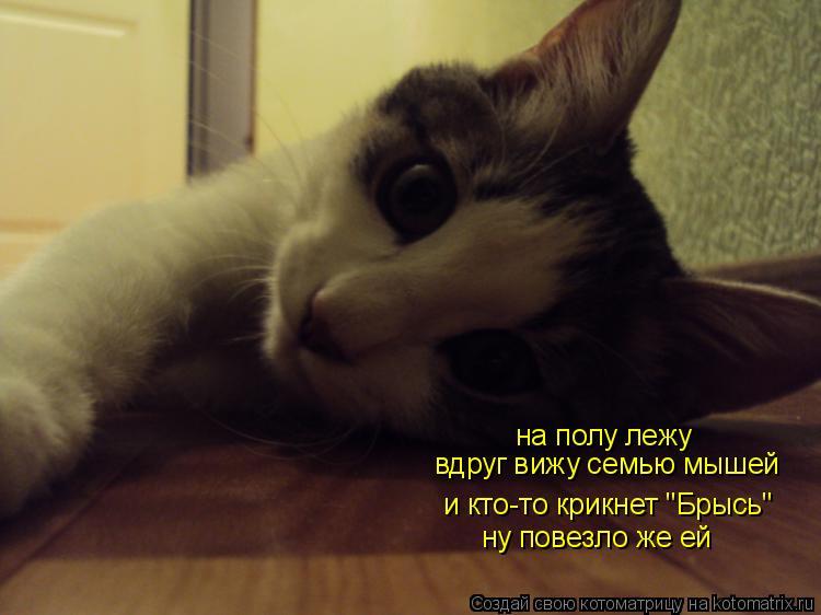 """Котоматрица: на полу лежу и кто-то крикнет """"Брысь"""" вдруг вижу семью мышей ну повезло же ей"""