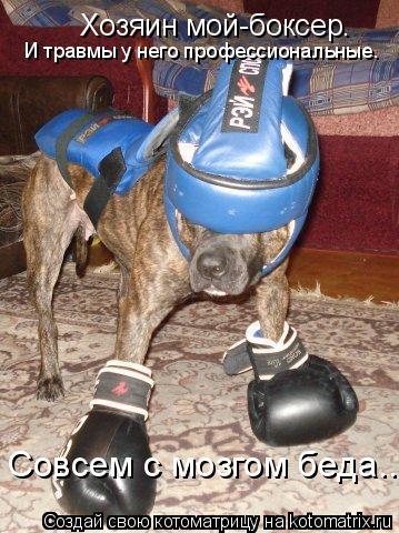 Котоматрица: Хозяин мой-боксер. И травмы у него профессиональные. Совсем с мозгом беда...