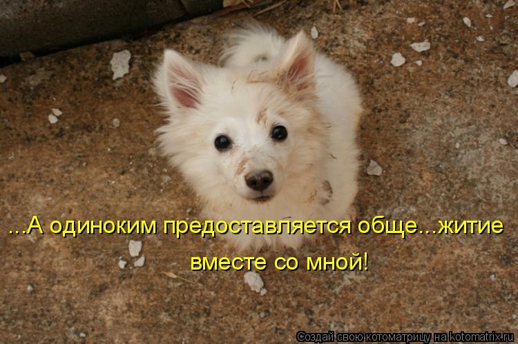 Котоматрица: ...А одиноким предоставляется обще...житие вместе со мной!