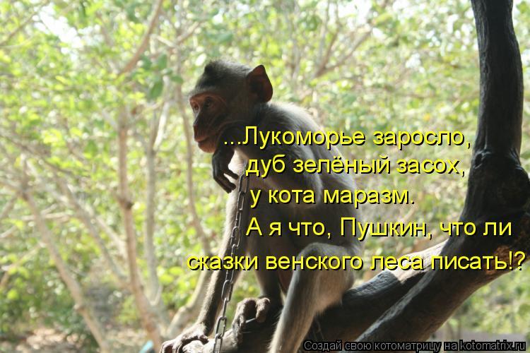 Котоматрица: ...Лукоморье заросло, дуб зелёный засох, у кота маразм. А я что, Пушкин, что ли сказки венского леса писать!?