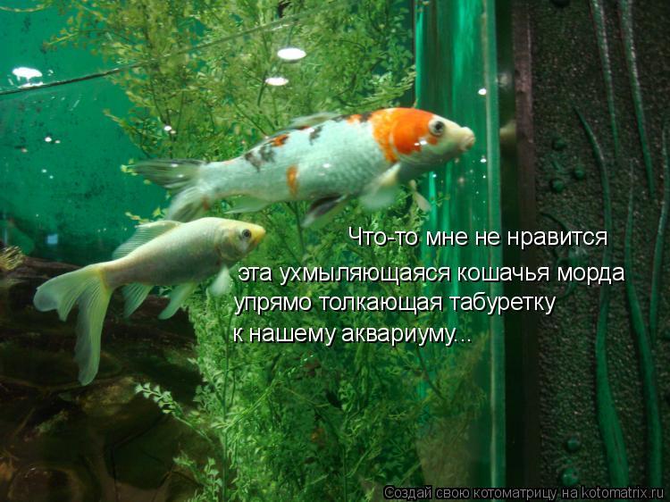Котоматрица: Что-то мне не нравится  эта ухмыляющаяся кошачья морда упрямо толкающая табуретку к нашему аквариуму...
