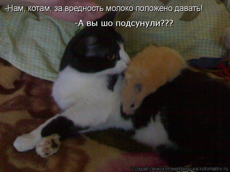Котоматрица: -Нам, котам, за вредность молоко положено давать! -А вы шо подсунули???