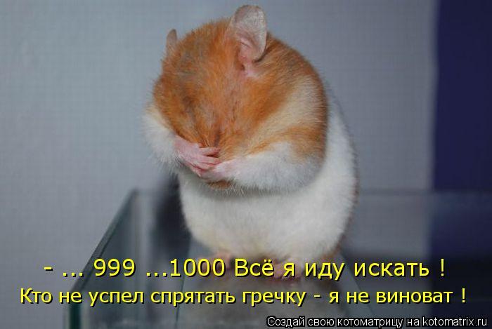 Котоматрица: - ... 999 ...1000 Всё я иду искать ! Кто не успел спрятать гречку - я не виноват !
