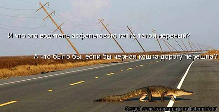 Котоматрица: И что это водитель асфальтового катка такой нервный? А что было бы, если бы черная кошка дорогу перешла?