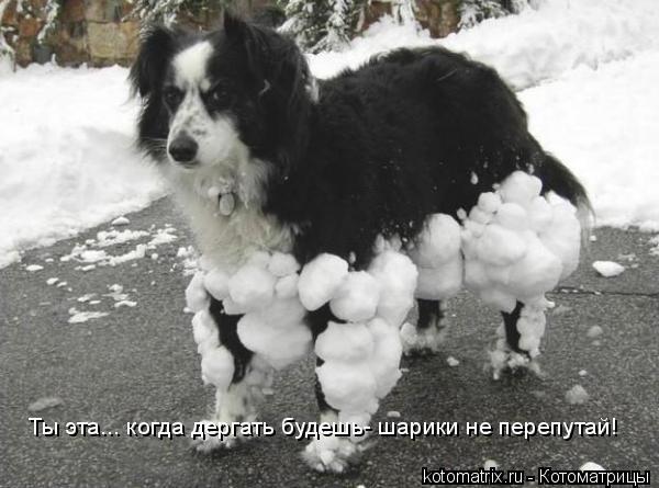 Котоматрица: Ты эта... когда дергать будешь- шарики не перепутай!