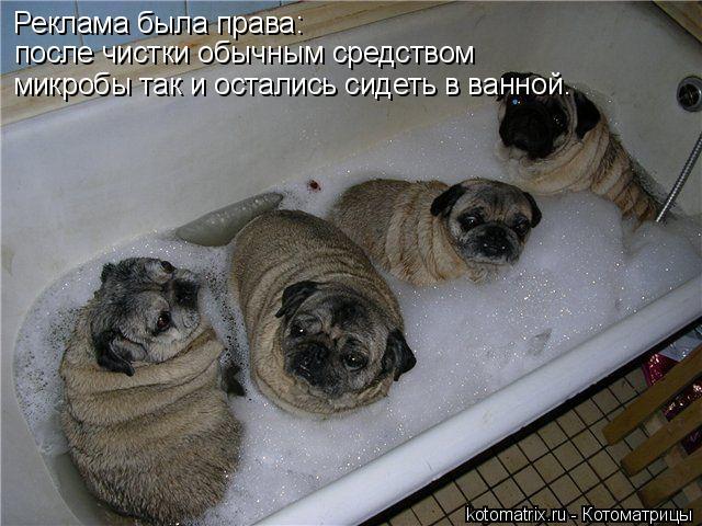 Котоматрица: Реклама была права: после чистки обычным средством микробы так и остались сидеть в ванной.