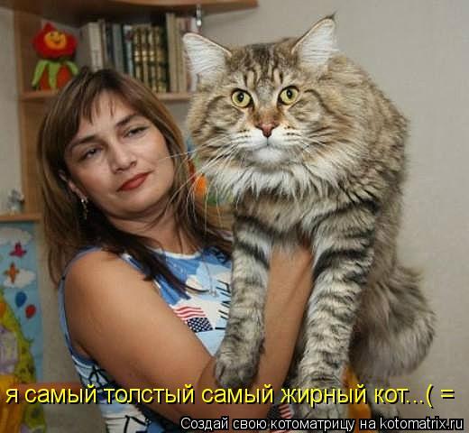 Котоматрица: я самый толстый самый жирный кот...( =