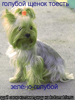 Котоматрица: голубой щенок тоесть зелёно-голубой