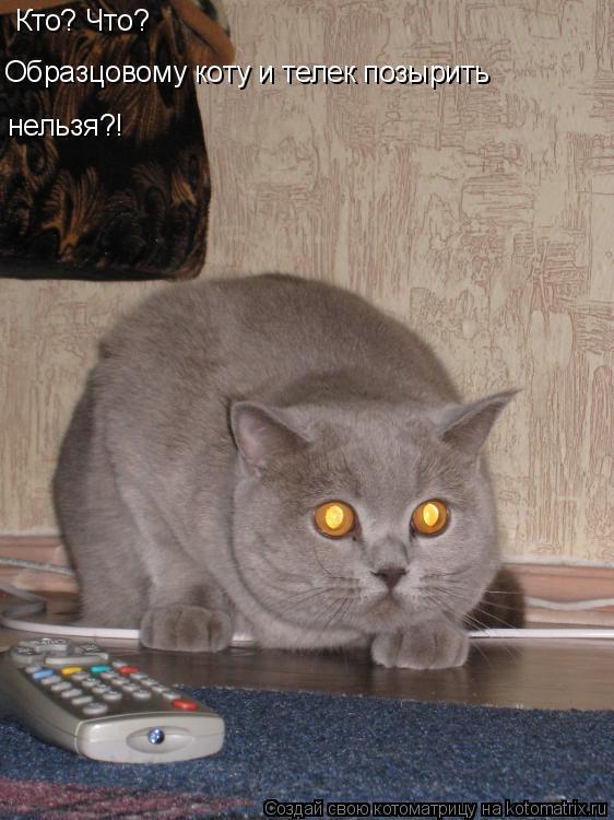 Котоматрица: Кто? Что? Образцовому коту и телек позырить  нельзя?!
