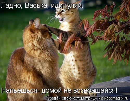 Котоматрица: Ладно, Васька, иди гуляй. Напьешься- домой не возвращайся!