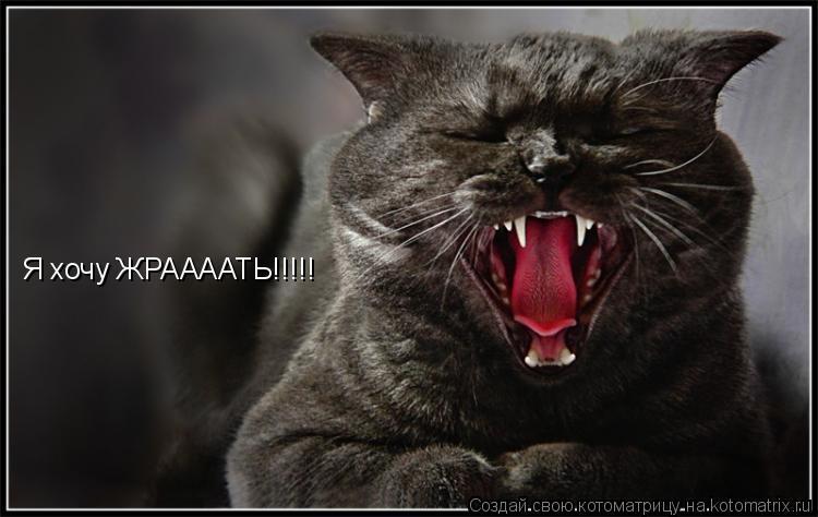 Котоматрица: Я хочу ЖРААААТЬ!!!!!