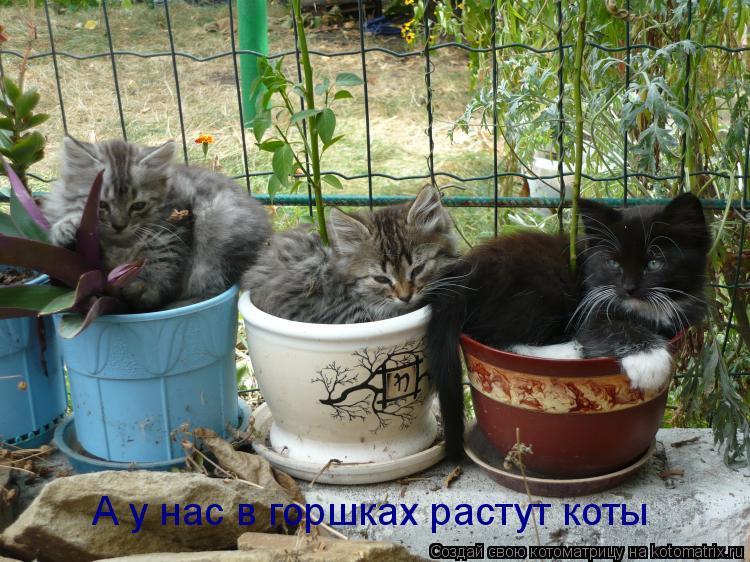 Котоматрица: А у нас в горшках растут коты