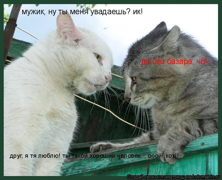 Котоматрица: мужик, ну ты меня увадаешь? ик! да без базара, чо!... друг, я тя люблю! ты такой хороший человек... ооой! кот!!