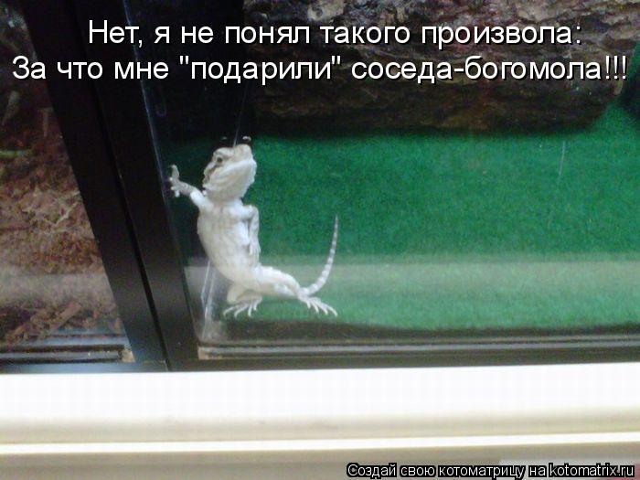 """Котоматрица: Нет, я не понял такого произвола: За что мне """"подарили"""" соседа-богомола!!!"""