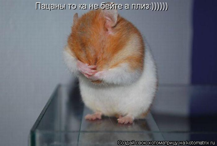 Котоматрица: Пацаны то ка не бейте а плиз:))))))