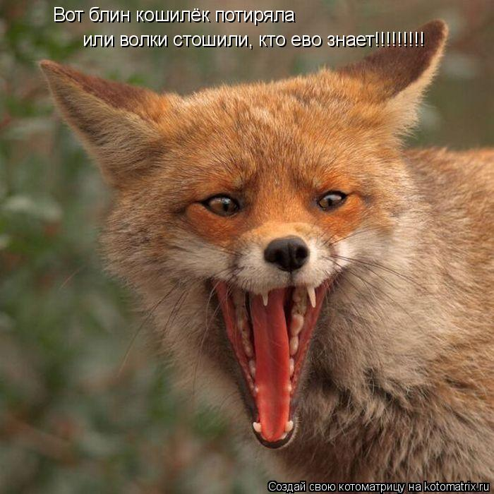 Котоматрица: или волки стошили, кто ево знает!!!!!!!!! Вот блин кошилёк потиряла