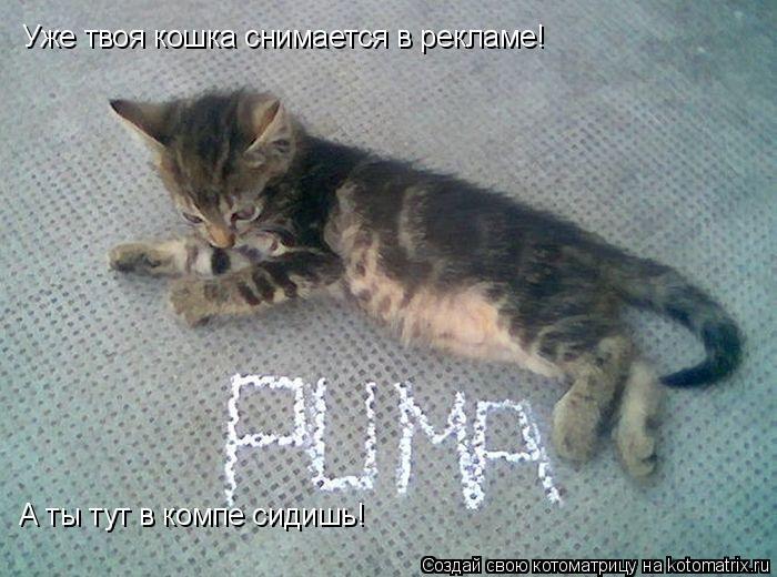 Котоматрица: Уже твоя кошка снимается в рекламе! А ты тут в компе сидишь!