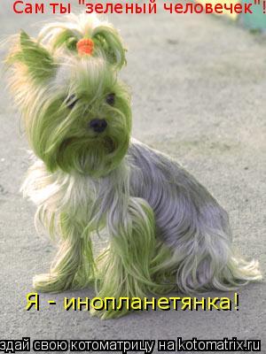 """Котоматрица: Сам ты """"зеленый человечек""""! Я - инопланетянка!"""