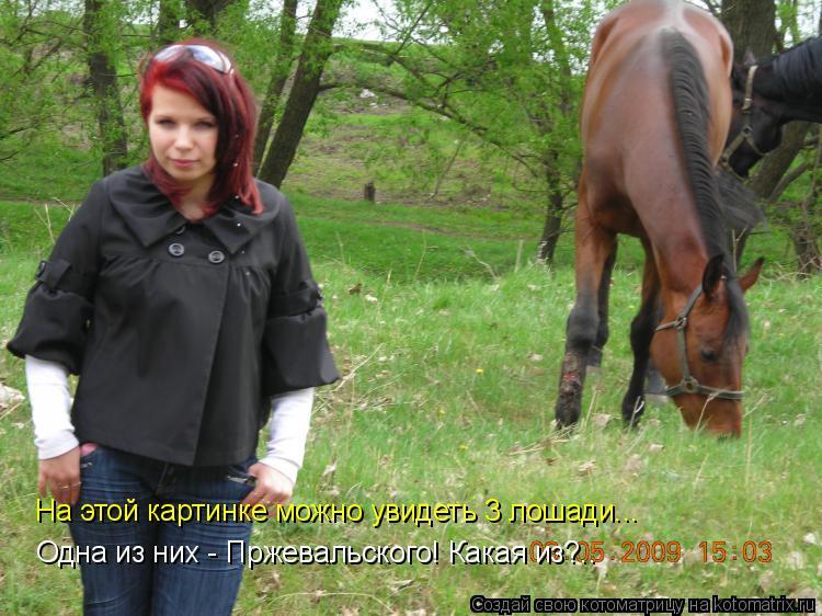 Котоматрица: На этой картинке можно увидеть 3 лошади... Одна из них - Пржевальского! Какая из?..