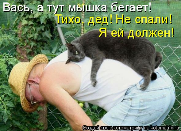 Котоматрица: Вась, а тут мышка бегает! Тихо, дед! Не спали! Я ей должен!