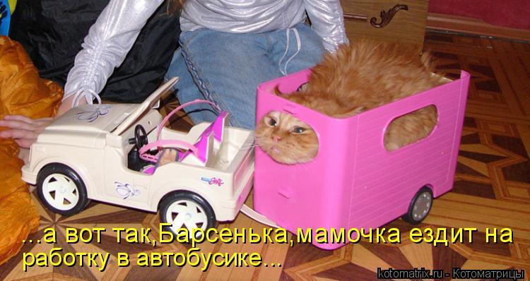 Котоматрица: ...а вот так,Барсенька,мамочка ездит на работку в автобусике...