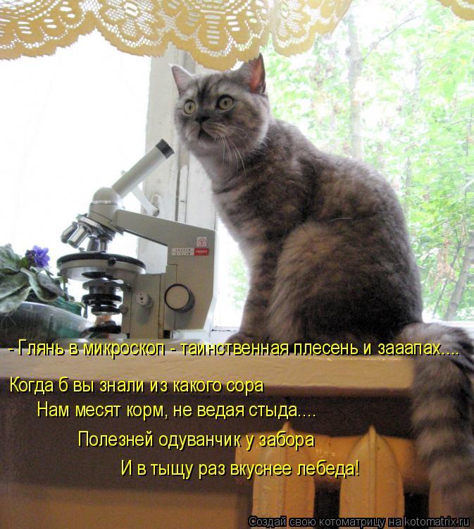 Котоматрица - - Глянь в микроскоп - таинственная плесень и зааапах.... Когда б вы зн
