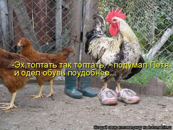 Котоматрица: -Эх,топтать так топтать, - подумал Петя и одел обувь поудобнее...