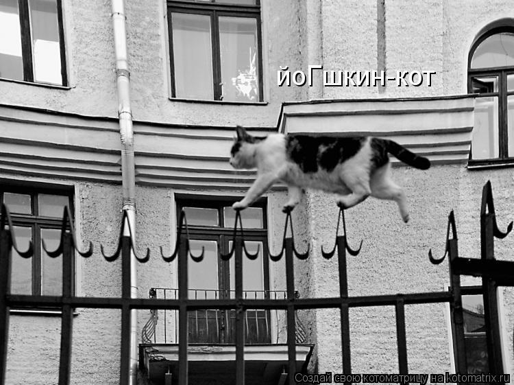 Котоматрица: йоГшкин-кот