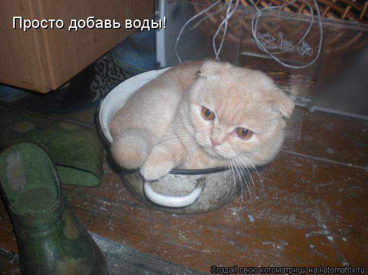 Котоматрица: Просто добавь воды!