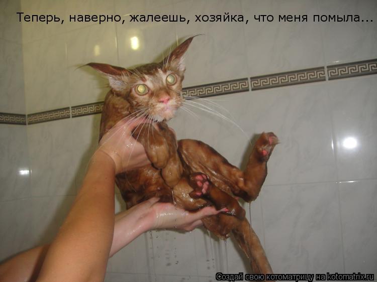 Котоматрица: Теперь, наверно, жалеешь, хозяйка, что меня помыла...