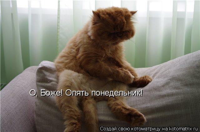 Котоматрица: О, Боже! Опять понедельник!