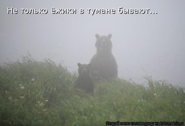 Котоматрица: Не только ёжики в тумане бывают...