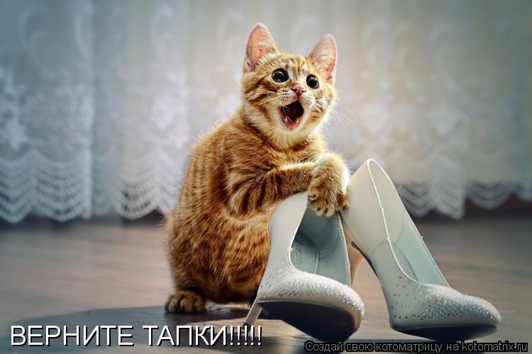 Котоматрица: ВЕРНИТЕ ТАПКИ!!!!!