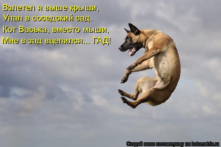 Котоматрица: Взлетел я выше крыши,   Упал в соседский сад.  Кот Васька, вместо мыши,  Мне в зад вцепился... ГАД!