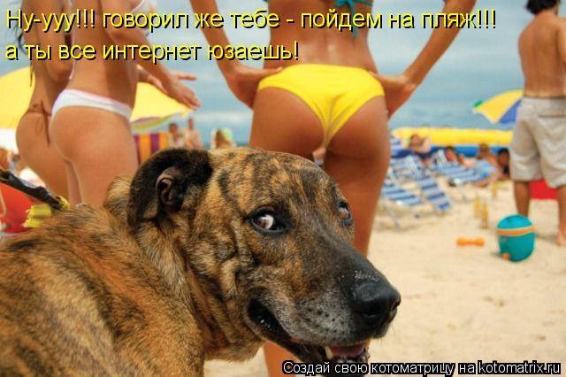Котоматрица: Ну-ууу!!! говорил же тебе - пойдем на пляж!!! а ты все интернет юзаешь!