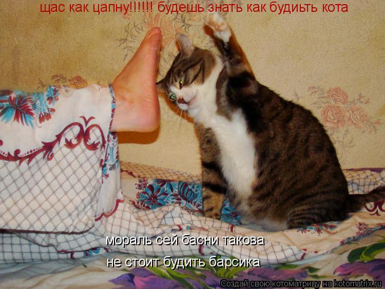 Котоматрица: щас как цапну!!!!!! будешь знать как будиьть кота мораль сей басни такова не стоит будить барсика