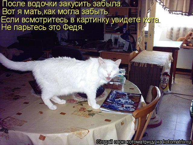 Котоматрица: После водочки закусить забыла. Вот я мать,как могла забыть. Если всмотритесь в картинку увидете кота. Не парьтесь это Федя.