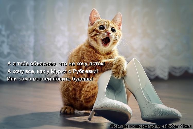 Котоматрица: А я тебе объясняю, что не хочу лоток! А хочу все, как у Мурки с Рублевки! Или сама мышей ловить будешь!
